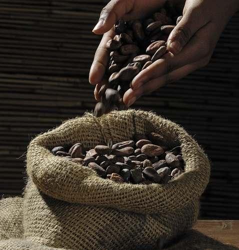 Лакомство с историей: шоколад радует человечество более 5000 лет