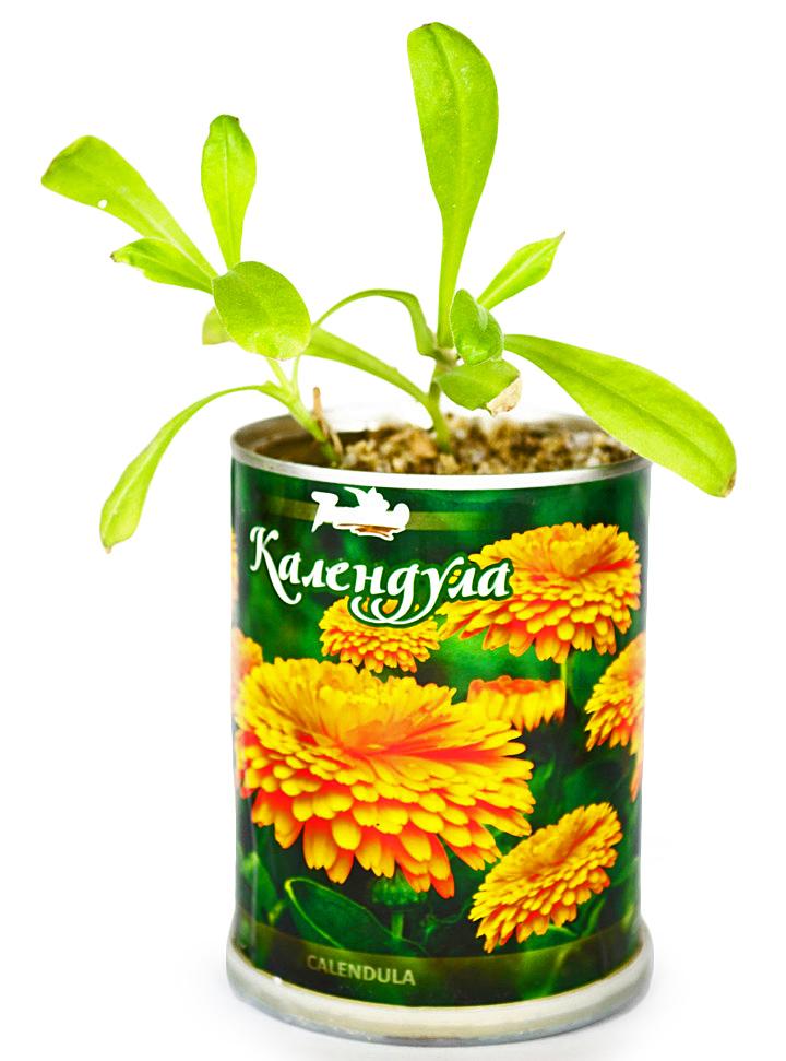 Живые цветы и деревья в банках с логотипом на 8 Марта